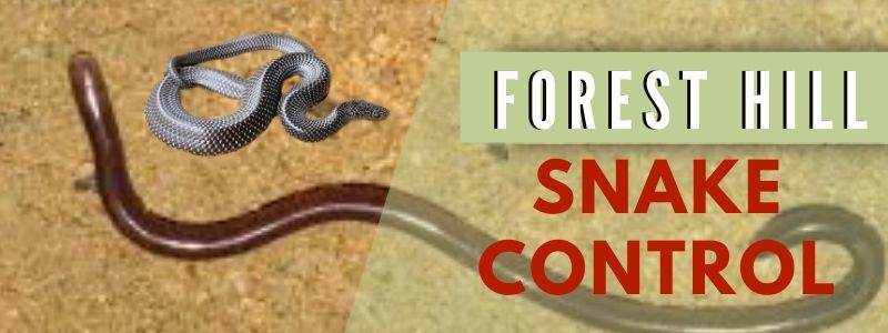 snake control forest hill