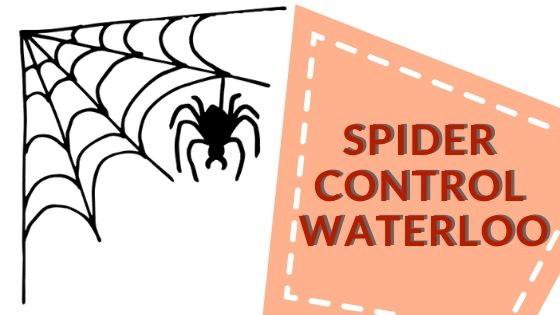 spider control waterloo