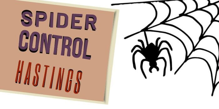 spider control hastings