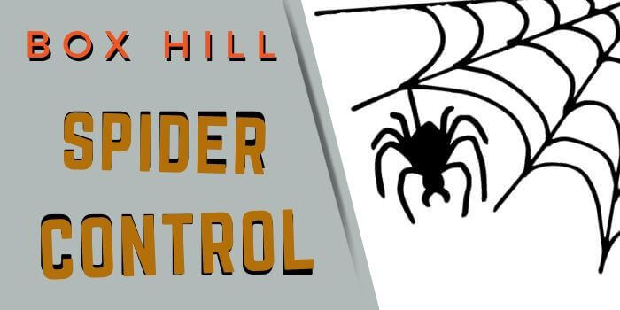 spider control box hill