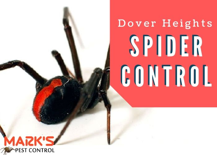 Spider control Dover Heights
