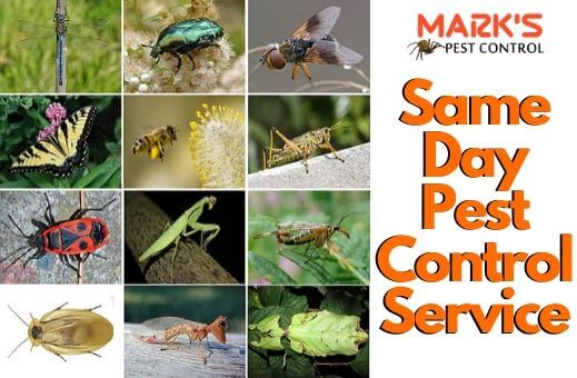 All kind of pest removal service