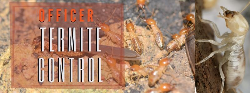 termite control officer