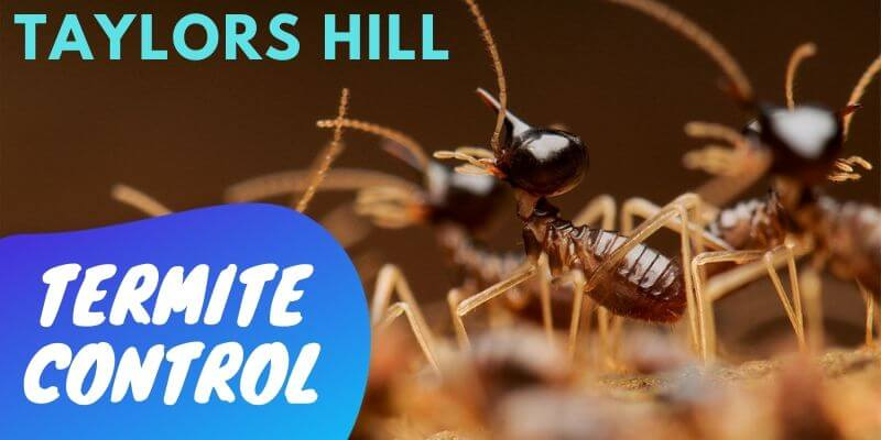 Termite control Taylors Hill