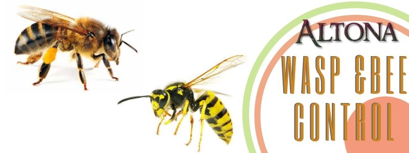 wasp and bee control