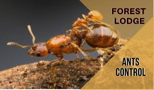 Ants control Forest Lodge
