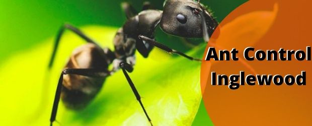 Ant Control Service