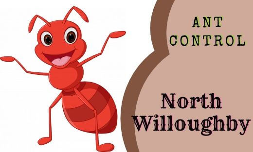 Ant Pest Control North Willoughby