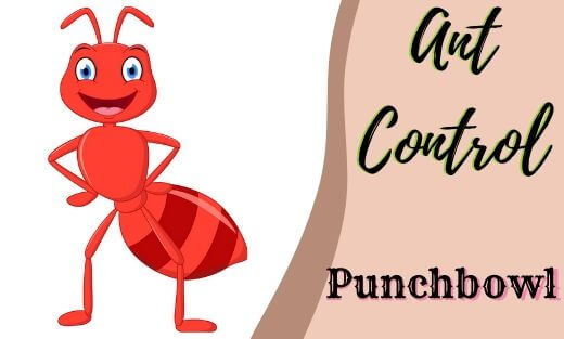 Ant Pest Control Punchbowl