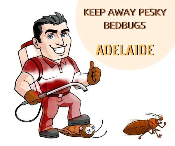 bedbugs removal service adelaide
