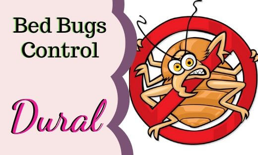 Bed Bug Pest Control Dural