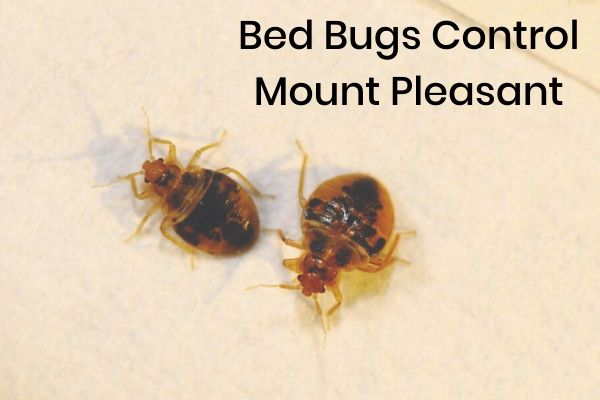Bed Bug Control Mount Pleasant
