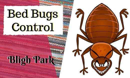 Bed Bug Pest Control Bligh Park