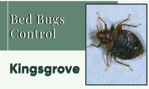 Bed Bug Pest Control Kingsgrove