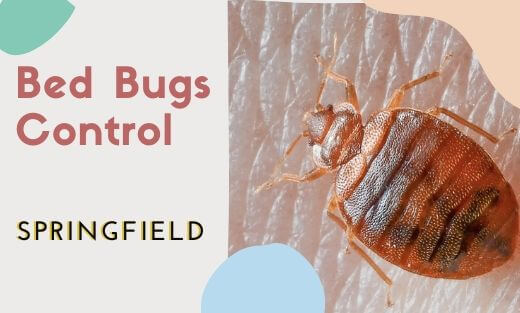 Bed Bug Pest Control Springfield