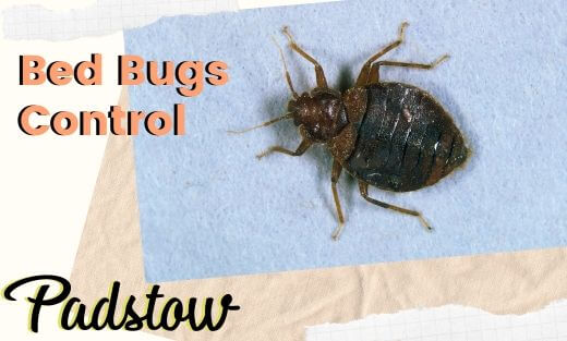 Bed Bug Pest Control Padstow