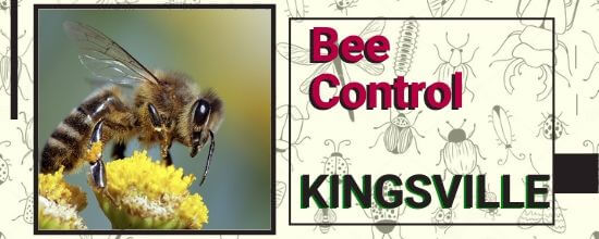 Bee Control Services