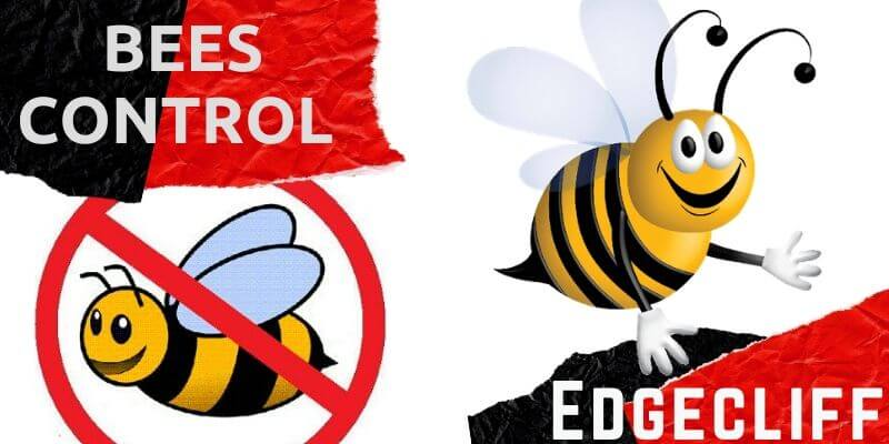 Bees control Edgecliff