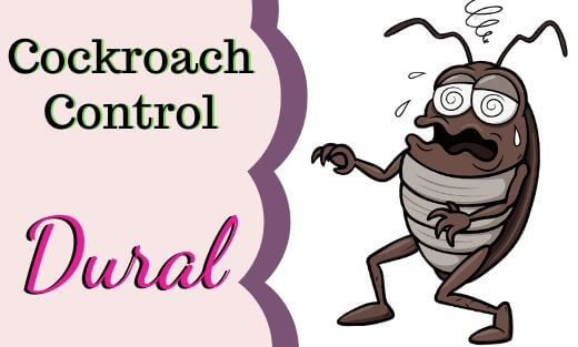 Cockroach Pest Control Dural