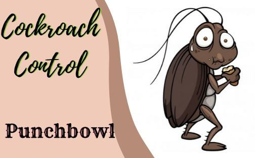 Cockroach Pest Control Punchbowl