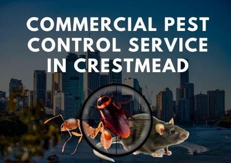 Commercial pest control Crestmead