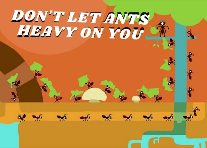 dont let ants heavy on you
