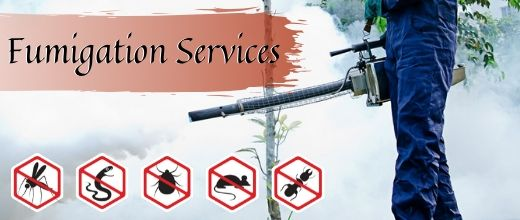 Fumigaion services