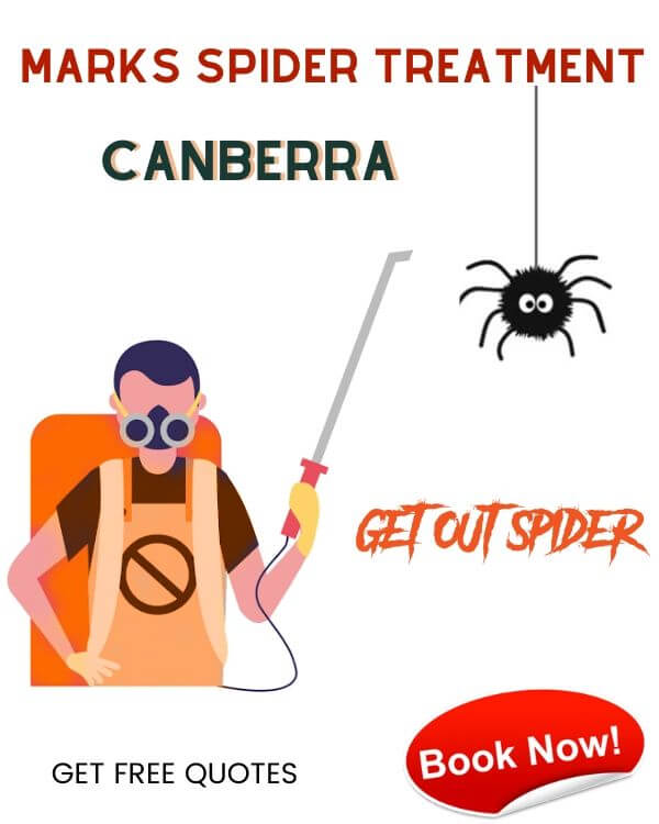 MARKS SPIDER TREATMENT CANBERRA