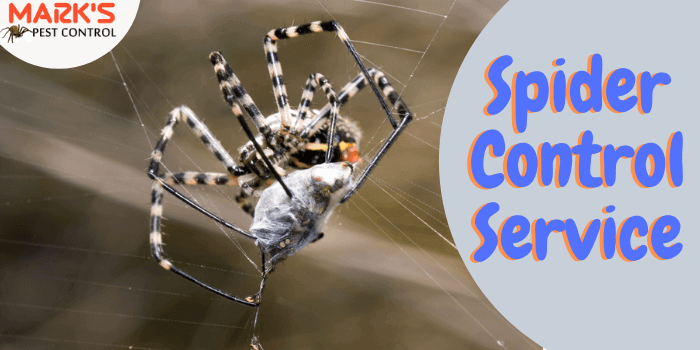 Marks Spider control service in North Toowoomba