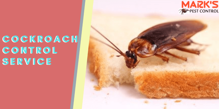 Marks cockroach control service in north Toowoomba
