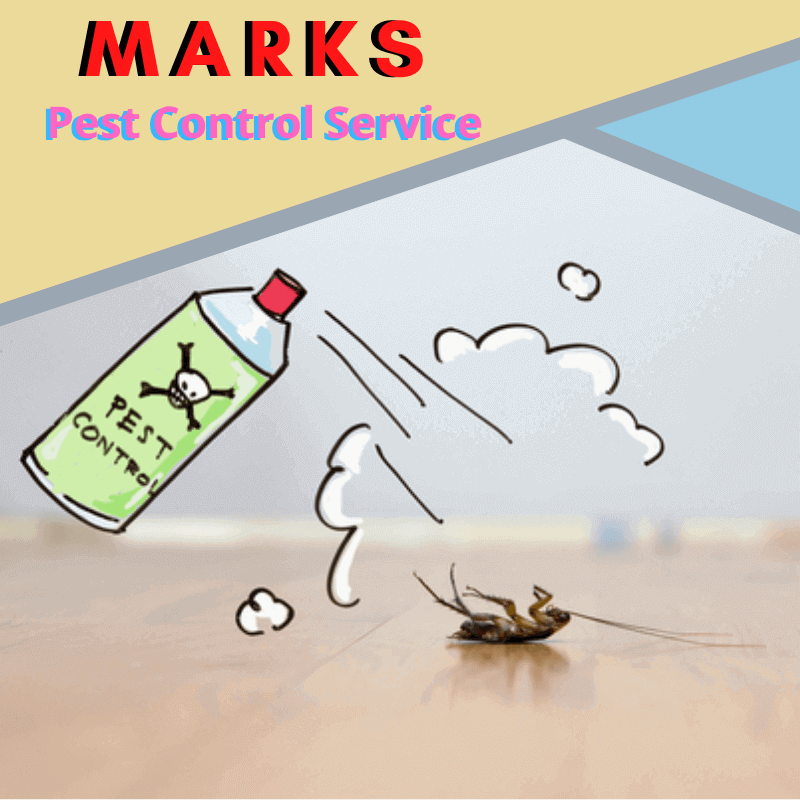 Marks pest control Service in North Toowoomba