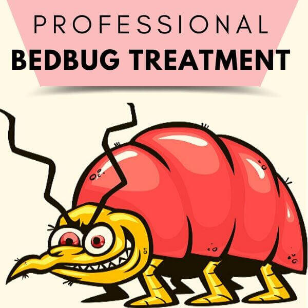 professional bedbugs treaatment adelaide