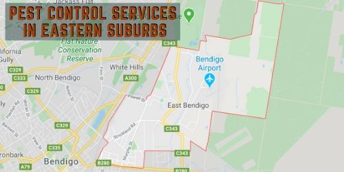 pest control service in eastern suburbs