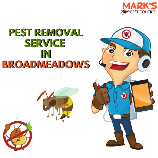 Pest Removal Service in Broadmeadows