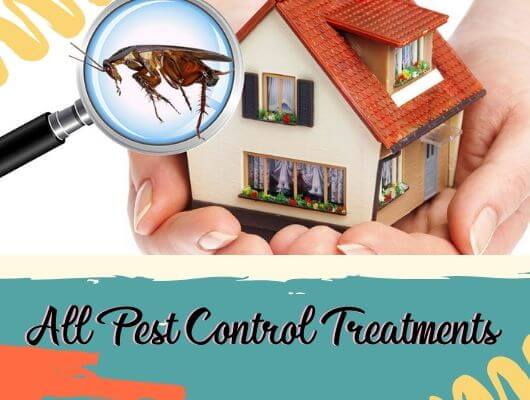 Pest Control Padstow