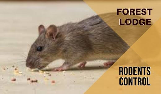 Rodent Control Forest Lodge