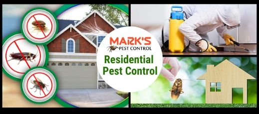 Residential Pest Control Waverton