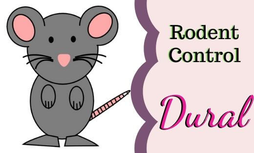 Rodent Pest Control Dural