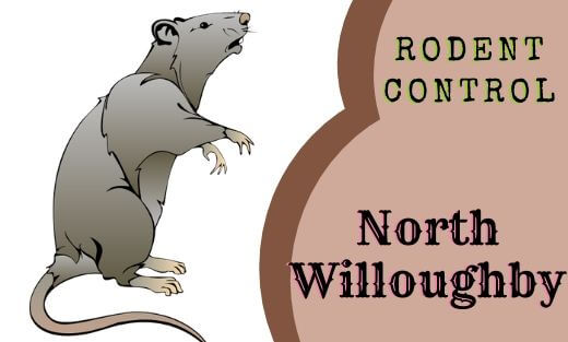 Rodent Pest Control North Willoughby