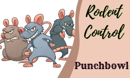 Rodent Pest Control Punchbowl