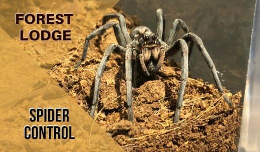 Spider control Forest Lodge