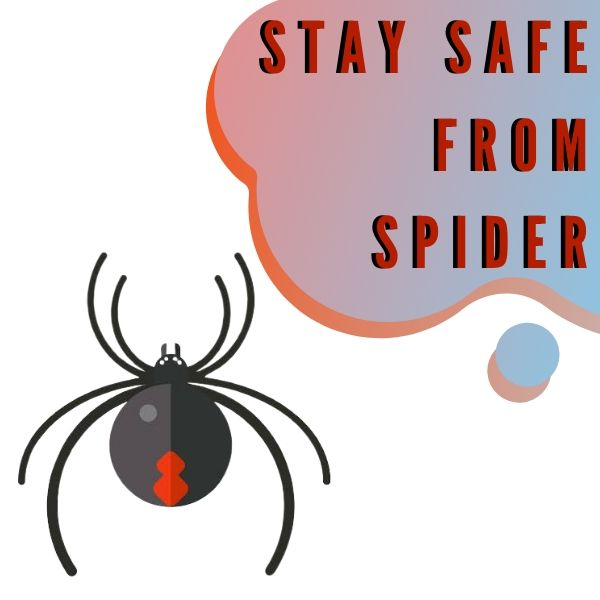 stay safe from spider