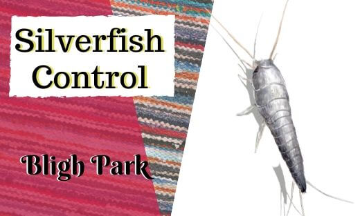 Silverfish Pest Control Bligh Park