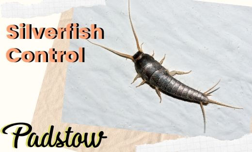 Silverfish Pest Control Padstow