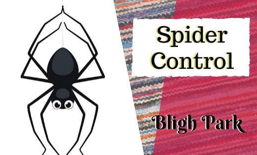 Spider Pest Control Bligh Park
