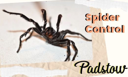 Spider Pest Control Padstow