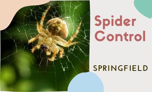 Spider Pest Control Springfield