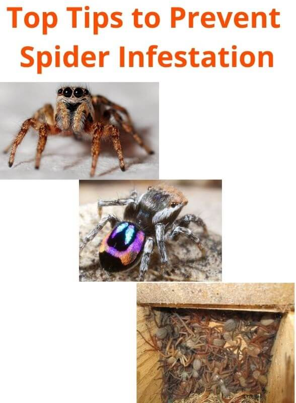 top tips to prevent spider infestation