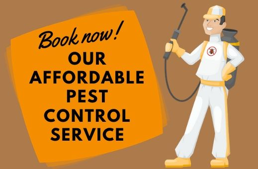 Affordable pest control solutions