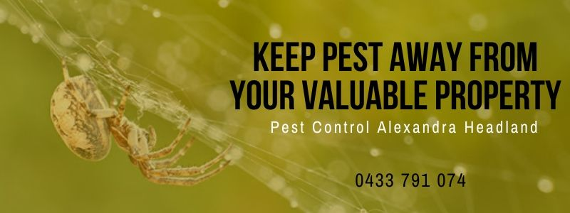 Pest-Free Property